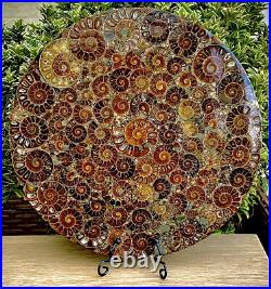 Massive 10 Natural Crystal Formed Ammonite Fossil 416 Million Years Old 250mm